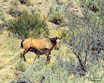 Photograph - Wild Filly Nursing by Bobbee Rickard