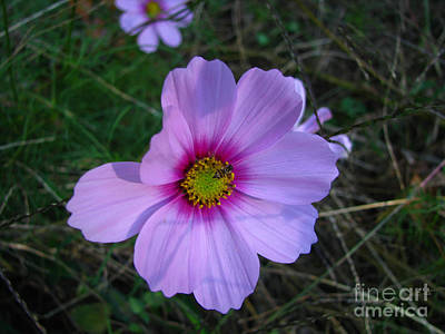 Photograph - Wild Flower by Donna Brown