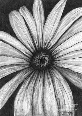 Daisy Drawing - Wild Flower by J Ferwerda