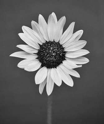 Photograph - Wild Flower by Kjirsten Collier