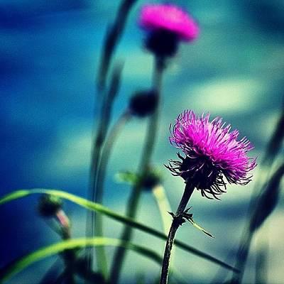Macro Photograph - Wild Flower by Luisa Azzolini