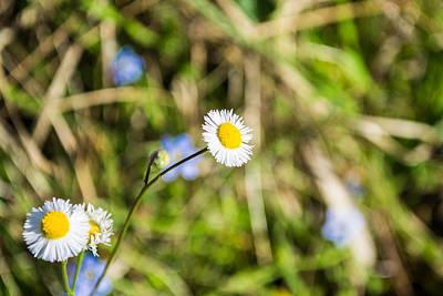 Photograph - Wild Flowers 1 by Shannon Harrington