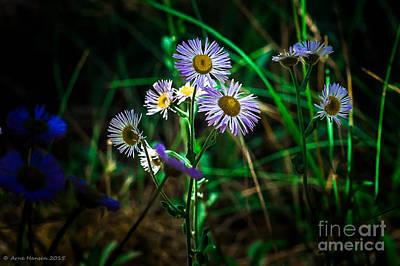 Wild Flowers 115 Print by Arne Hansen