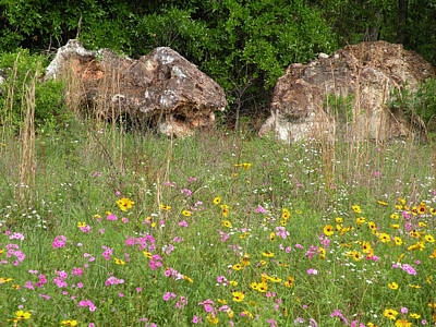 Becky Photograph - Wild Flowers And Guardian Rocks by Becky Erickson