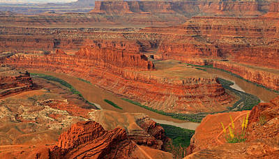 Animals Photos - Wild flowers at Dead Horse Point. by Johnny Adolphson