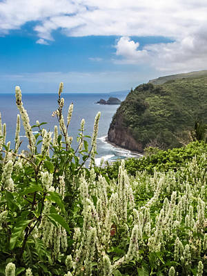 Photograph - Wild Flowers At Pololu by Denise Bird