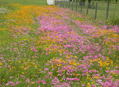 Becky Photograph - Wild Flowers By The Fence by Becky Erickson