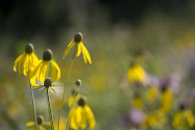 Photograph - Wild Flowers by Daniel Sheldon