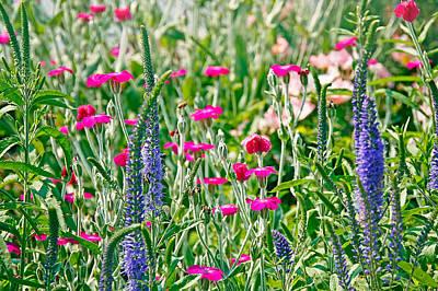 Photograph - Wild Flowers by Deb Buchanan