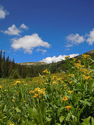 Impressionist Landscapes - Wild Flowers in Rocky Mountain National Park by Heather Coen