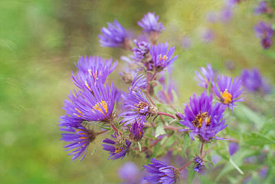Photograph - Wild Flowers In The Fall by Michael Colgate