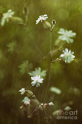 Photograph - Wild Flowers In The Rain by Sandra Cunningham