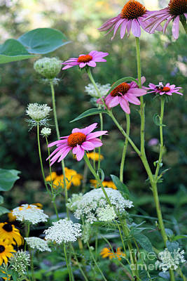 Photograph - Wild Flowers by Karen Adams