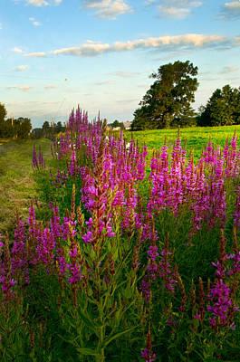 Word Signs - Wild flowers lining a field  by Randall Branham