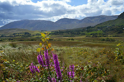 Photograph - Wild Flowers Of Connemara. by Terence Davis