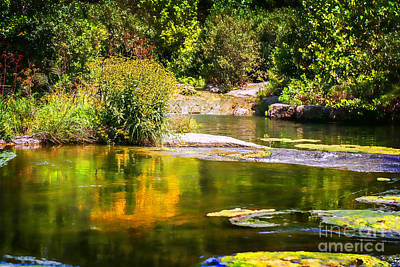 Photograph - Wild Flowers On Blue River by Tamyra Ayles