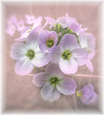 Photograph - Wild Flowers by Fiona Messenger
