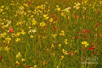 Photograph - Wild Flowers by Susan Parish