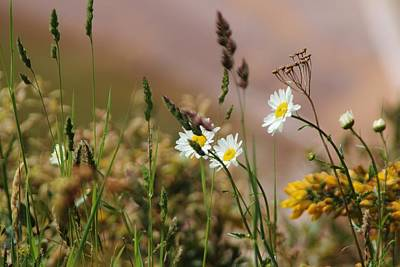 Photograph - Wild Flowers by Theresa Selley