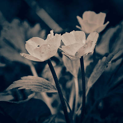 Photograph - Wild Flowers by Tom Druin