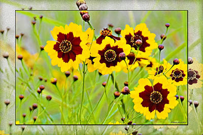 Photograph - Wild Flowers  by Walter Herrit