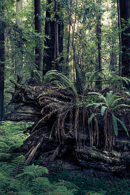 Giant Fern Photograph - Wild Forest by Alexander Kunz