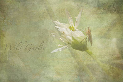 Photograph - Wild Garlic by Liz  Alderdice