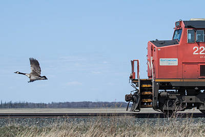 Photograph - Train Chasing Canada Goose by Steve Boyko