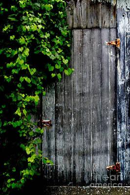 Photograph - Wild Grape Vine Door by Michael Arend