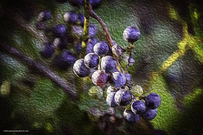 Vines Photograph - Wild Grapes In Oil by LeeAnn McLaneGoetz McLaneGoetzStudioLLCcom