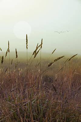 Jimerson Photograph - Wild Grass by Wes Jimerson