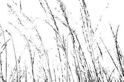 Wild Grasses Abstract Print by Natalie Kinnear