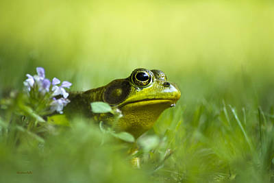 Photograph - Wild Green Frog by Christina Rollo