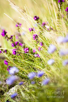 Photograph - Wild Heather And Sheepsbit Scabious Flowers by Jan Bickerton