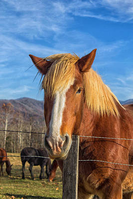 Wild Horse At Cades Cove In The Great Smoky Mountains National Park Art Print by Peter Ciro