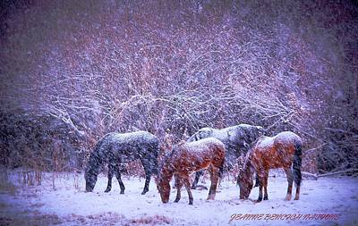 Photograph - Wild Horse Christams by Jeanne  Bencich-Nations