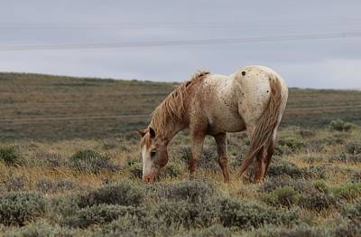 Art Print featuring the photograph Wild Horse by Christy Pooschke