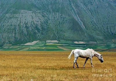 Photograph - Wild Horse by Emanuela Carratoni