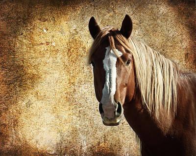 Photograph - Wild Horse Fade by Steve McKinzie