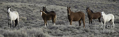 Wild Horse Photograph - Wild Horse Family In Adobe Town by Carol Walker
