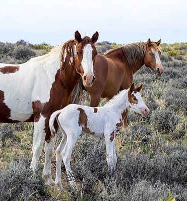 Wash Basins Photograph - Wild Horse Family Portrait by Nadja Rider