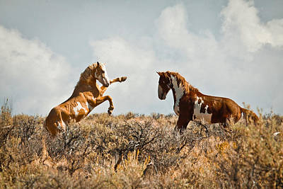Photograph - Wild Horse Fight by Steve McKinzie