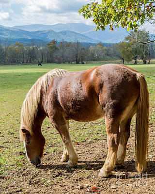 Photograph - Wild Horse Grazing by Gene Berkenbile