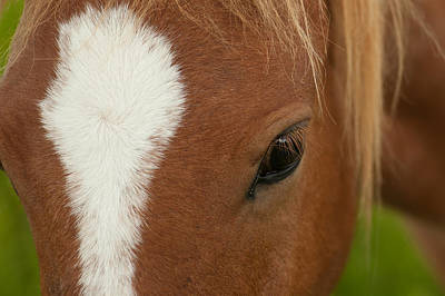 Photograph - Wild Horse by Joye Ardyn Durham