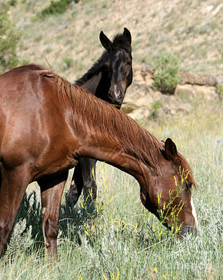 Photograph - Wild Horse Mama And Her Baby by Sabrina L Ryan