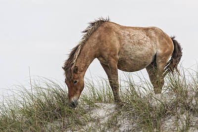 Photograph - Wild Horse Mare On Sand Dune by Bob Decker