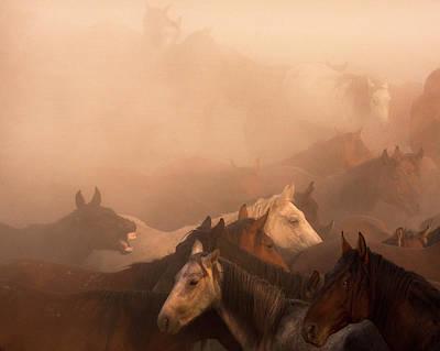 Animals Photograph - Wild Horse by Nimet G?nen? ??naro?lu