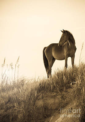 Wild Horse On The Beach Art Print