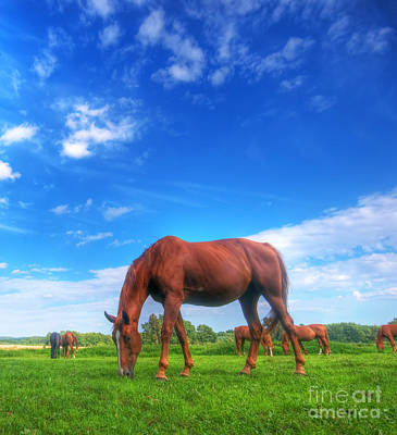 Wild Horse On The Field Art Print