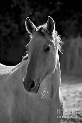 Photograph - Wild Horse Portrait Black And White by Heather Kirk